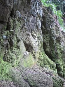 島根・鳥取旅行2日目に行った出雲大社の素鵞社裏の岩。